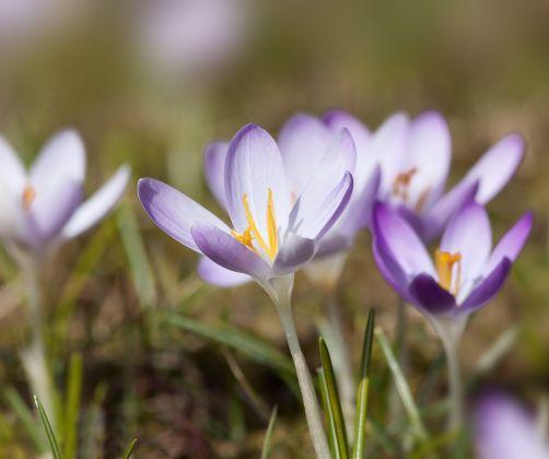 spring-nature-blossom-plant-flower-purple-petal
