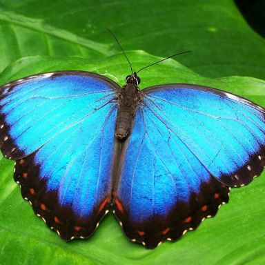 butterfly animal