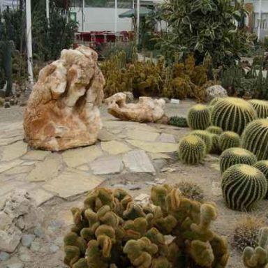 cactus oase ruurlo