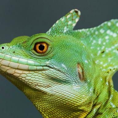 reptile zoo animal
