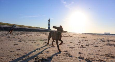 intro-dog-beach-europarcs-schoneveld