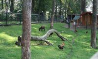 animal-meadow-europarcs-brunssummerheide
