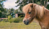 animal-horse-europarcs-reestervallei