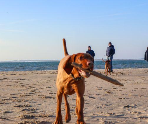 dog-beach1-europarcs-schoneveld