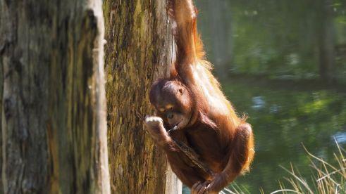 surroundings-zoo-monkey-apenheul-europarcs-beekbergen