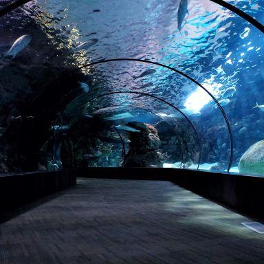 aquarium tunnel zoo animals