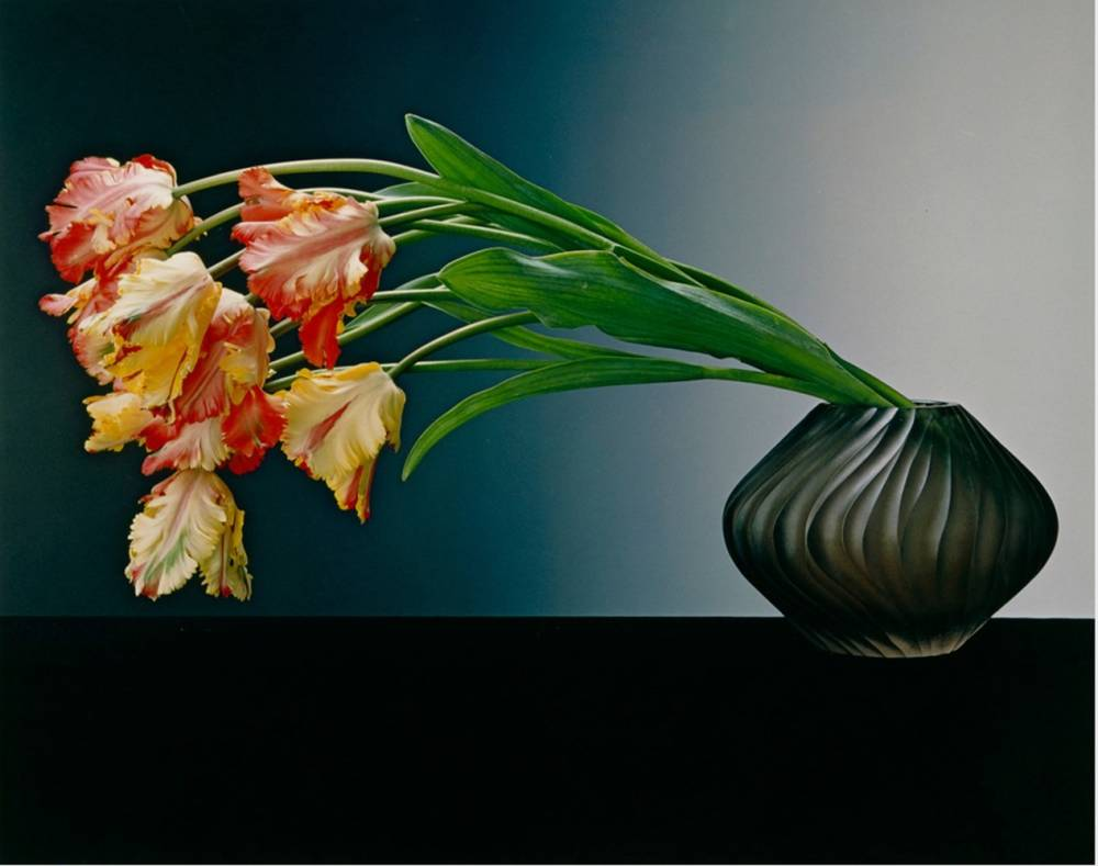 Robert mapplethorpe s sensual ikebana