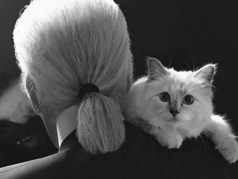Header image fustany   article main   news   karl lagerfeld and his cat