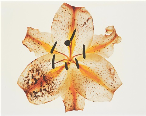 Irving penn  lily  melridge  new york   1971