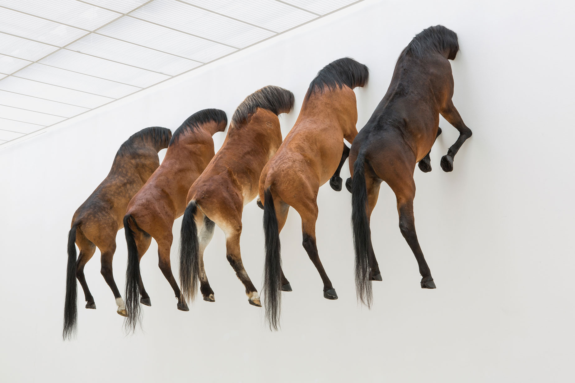 Maurizio cattelan  untitled  2007  taxidermied horses  installation view of kaputt  fondation beyeler