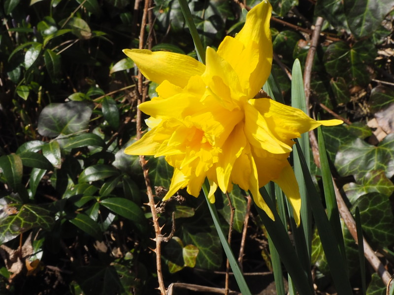 Nå er våren på gang. alt lyser mot oss!