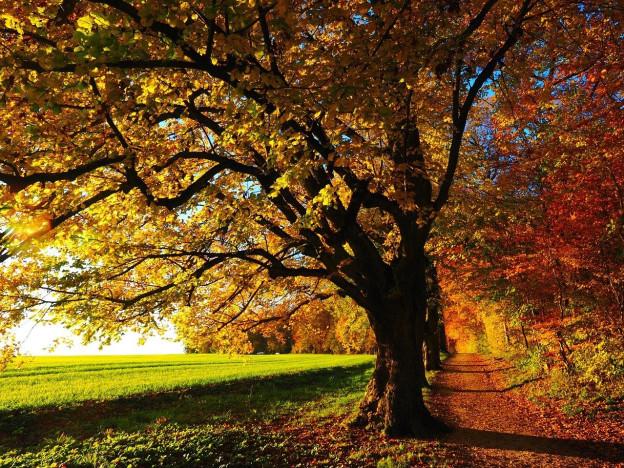 Høsten kommer snart...