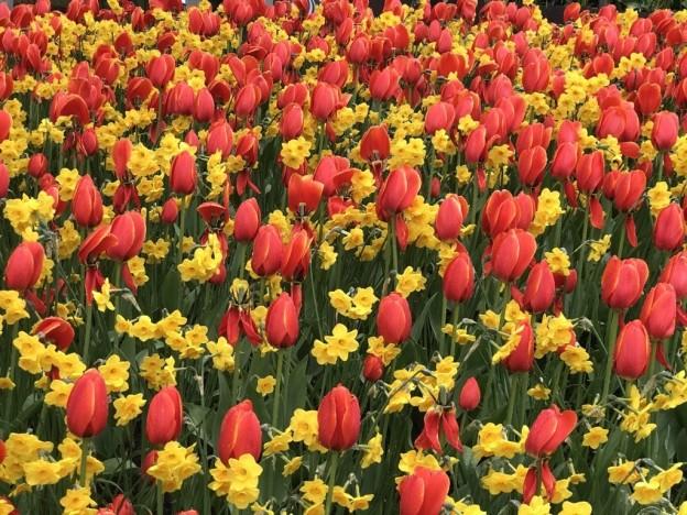 Våren lar seg heldigvis ikke stoppe - selv ikke av korona..                    Foto: Nina Høst