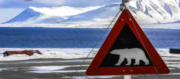 featured-svalbard-polar-bear-sign-winter.jpg