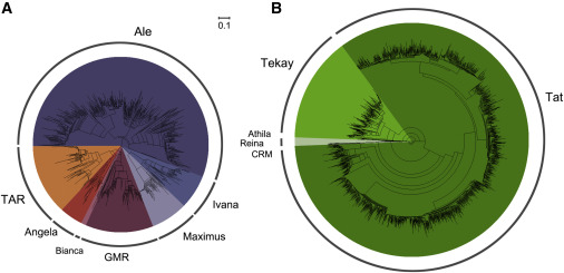 Phylogenetic Analysis of the LTR Retrotransposon Sequences in the Tea Tree Genome.