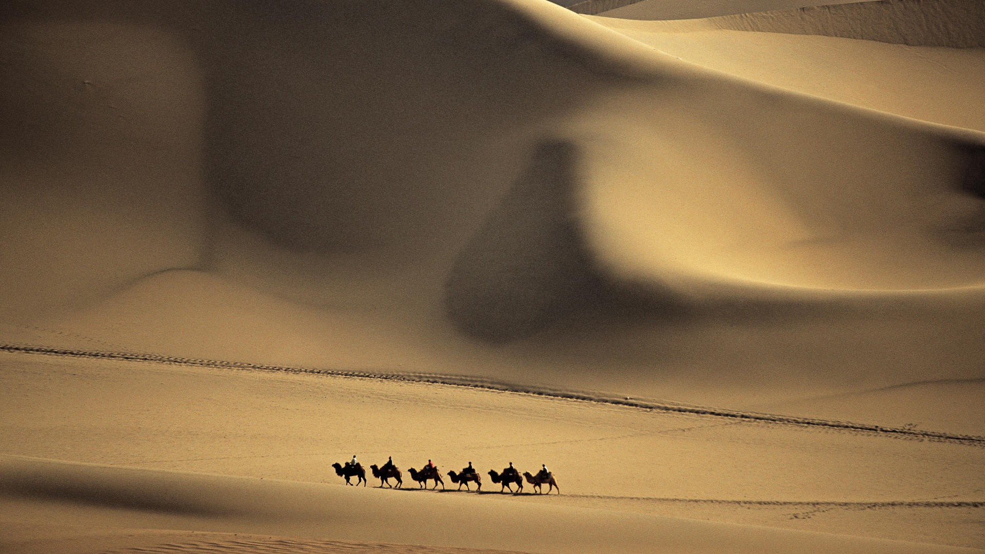 Camel Caravan Passes Through the Sands that Sing Taklimakan Desert China