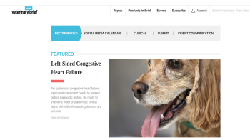 Veterinary Team Brief website screenshot
