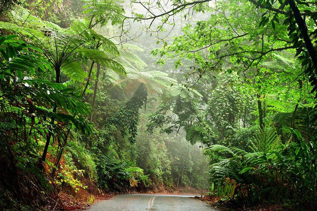 daintree-national-park-qld