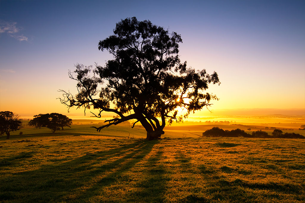 sunrise-over-the-clare-valley-south-australia