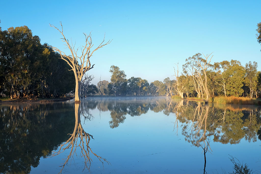 trees reflected on wimmera river in horsham australia