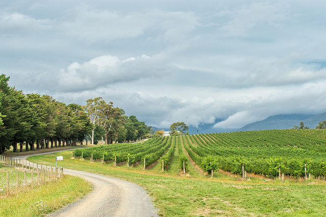 vineyard-yarra-valley