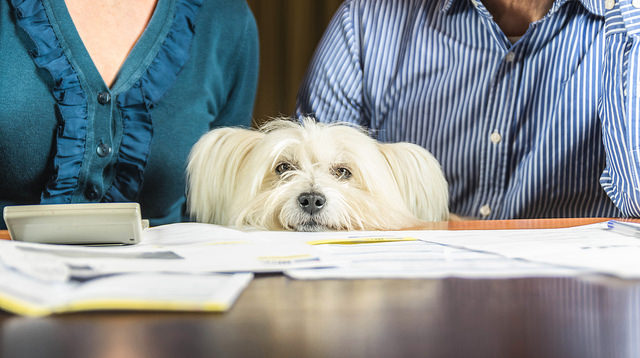 family-and-dog-looking-over-finances-at-desk