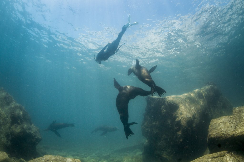 sea lions in baja
