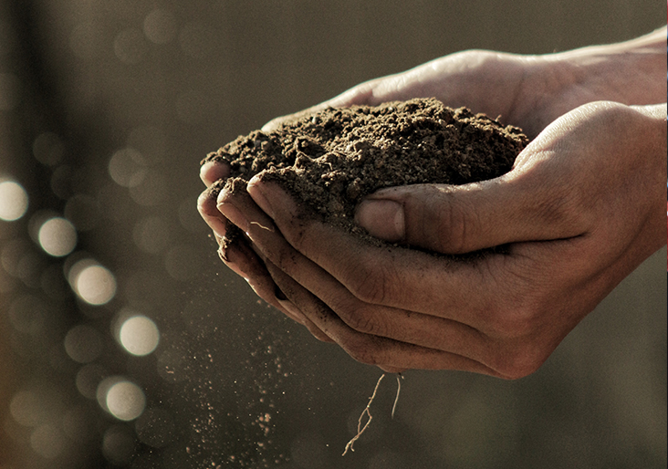 World Soil day blog