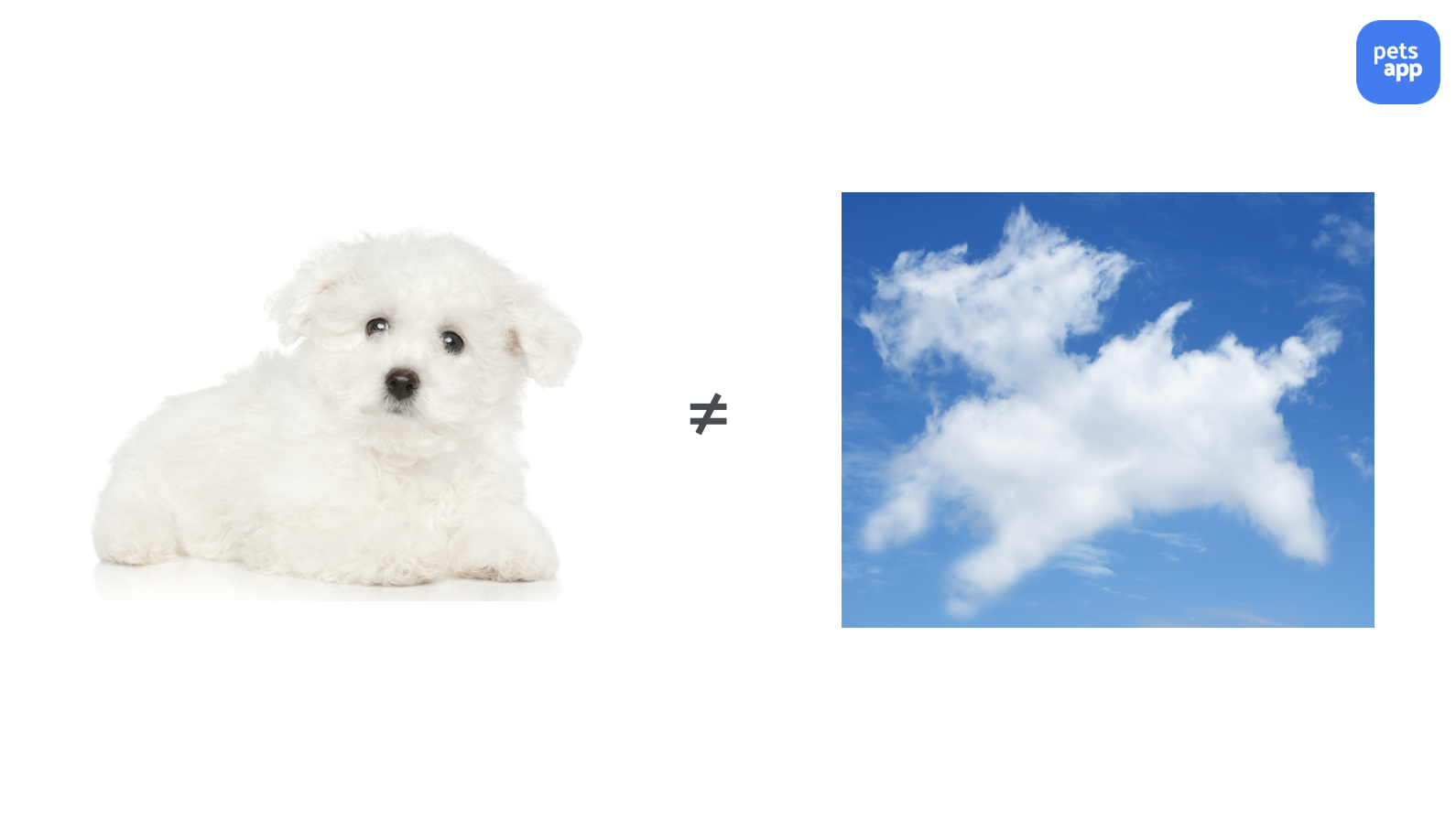 A Practitioner's Guide - Dog and cloud