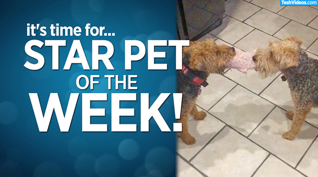 Star Pet Of The Week – January 17, 2020