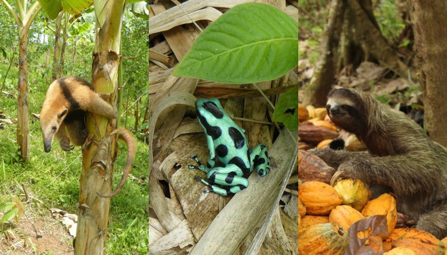 Panama is one of the most biodiverse places on the planet.