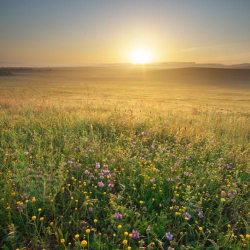 Sonnenaufgang über bunter Blumenwiese