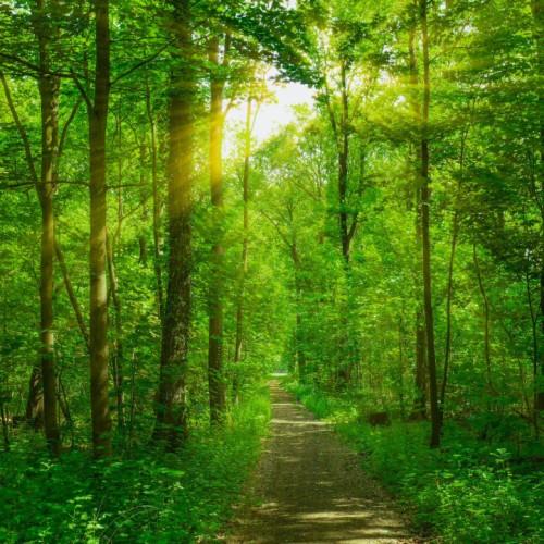 Grüner Wald bei Sonnenaufgang