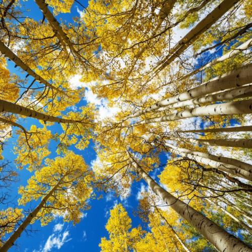 Wald im Herbst unter blauem Himmel