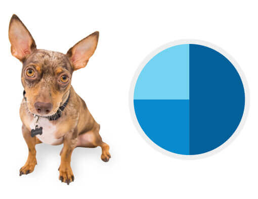 World's Leading Canine DNA Tests | Wisdom Panel