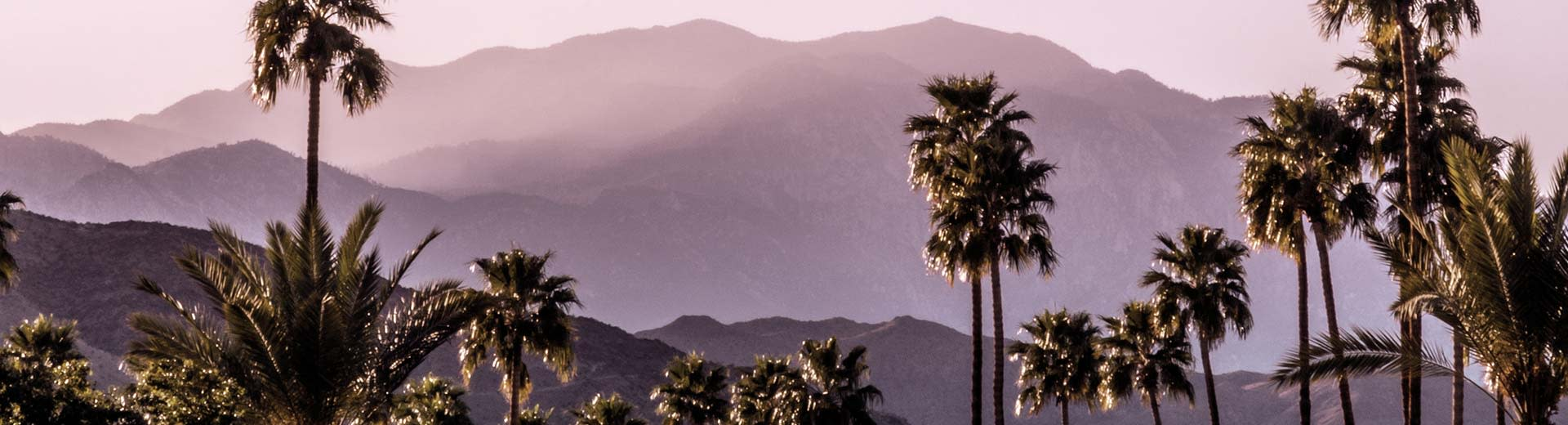 Hills in the background, while palm strees dominate the foreground on a clear and hot day in Palm Springs