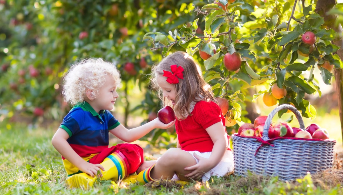 kids-picking-apples-in-fruit-garden-picture-id648442062.jpg