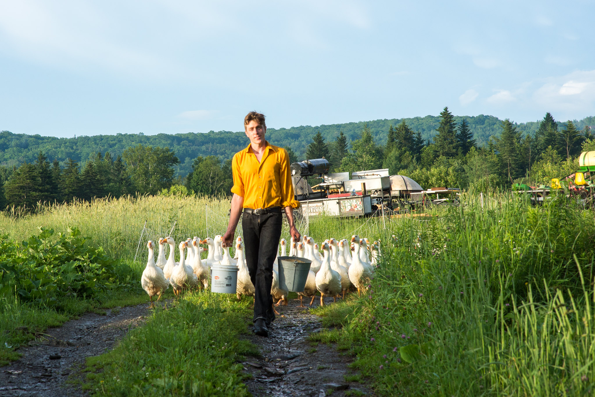A man holding a bucket surrounded on either side by geese in a field