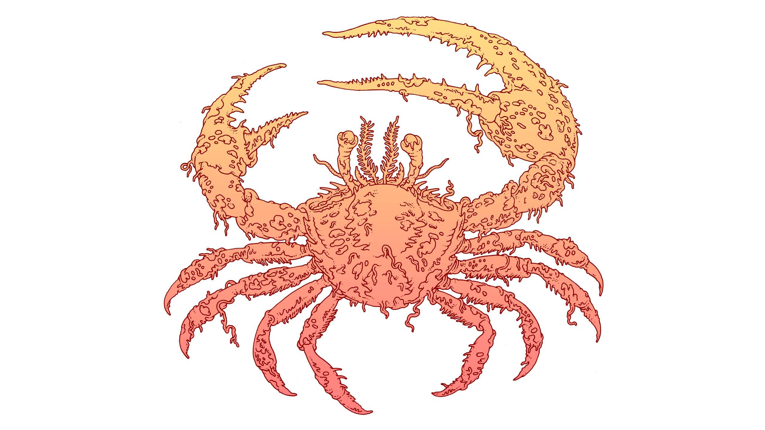 Fiddlercrabfinal
