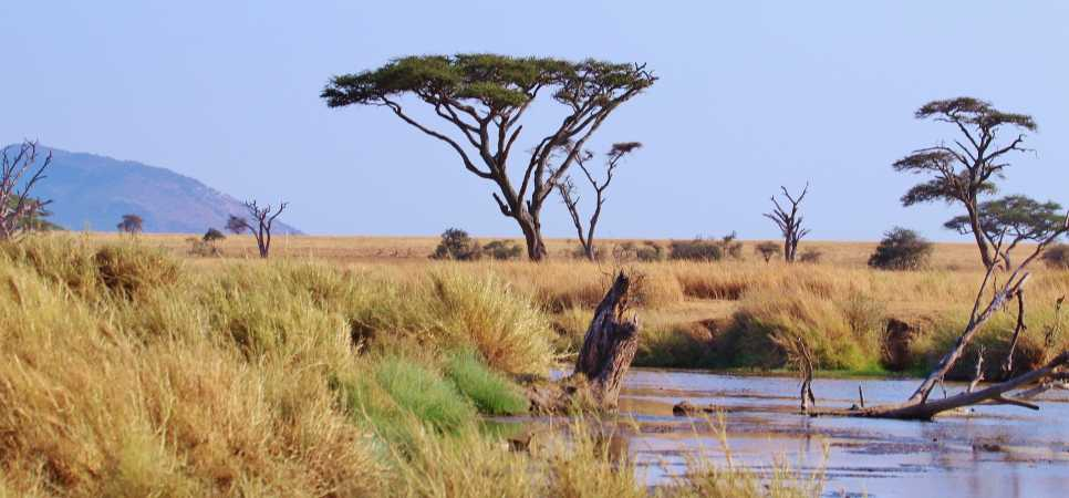 Watering hole, Serengeti National Park