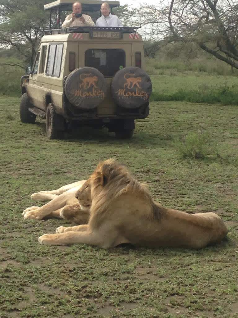 Lions relaxing at Serengeti