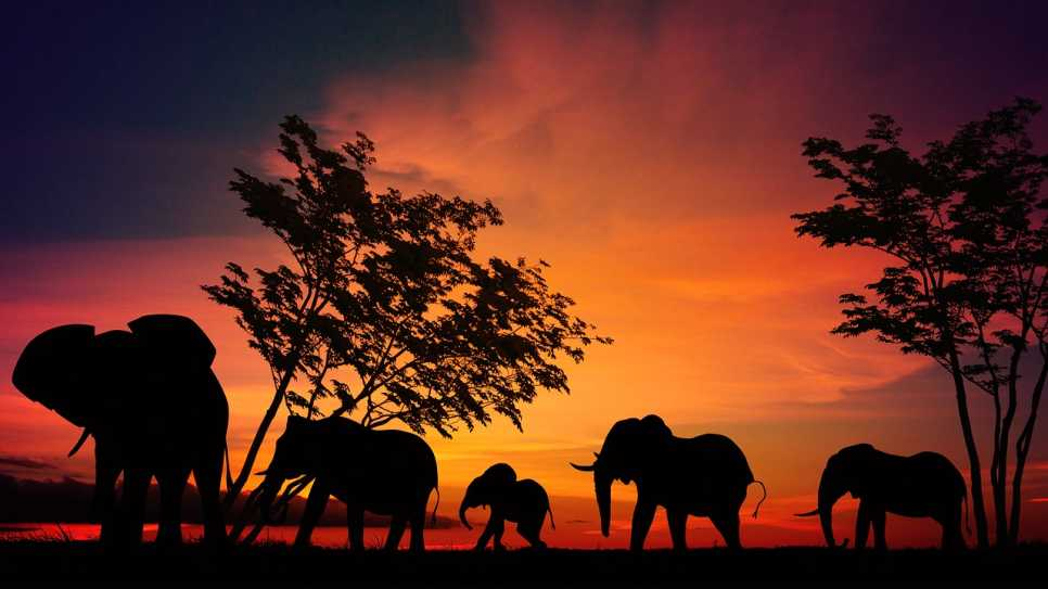 Elephants, Serengeti National Park