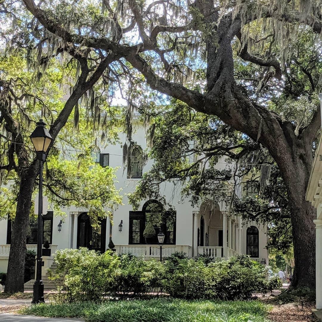 Savannah: Part 1