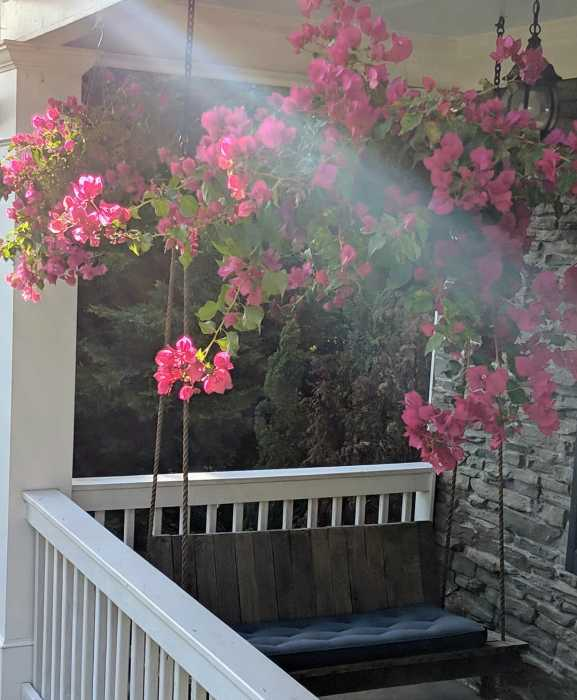 Happiness is Bougainvillea