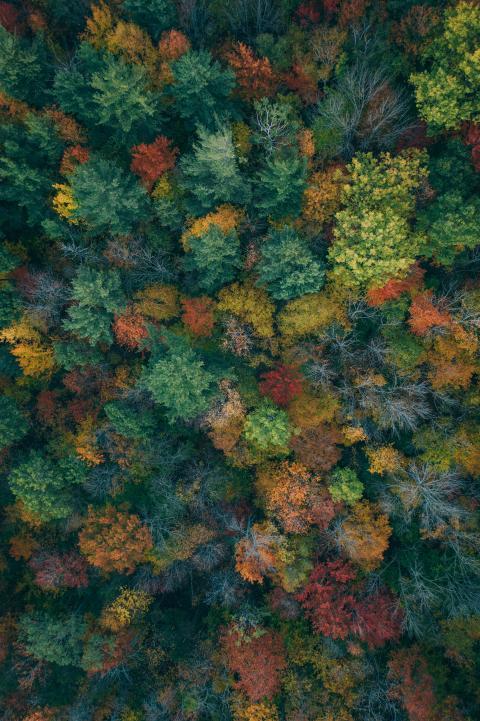 martin-sanchez-autumn-trees-unsplash