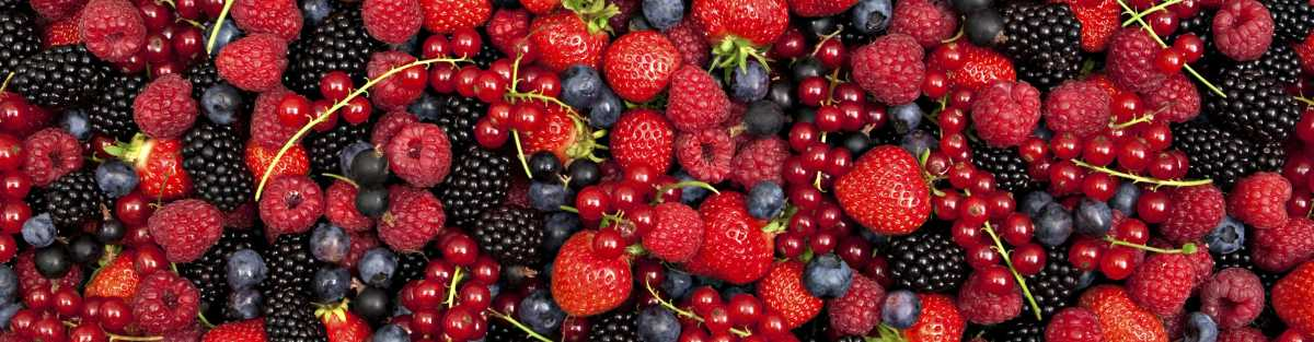 berries header