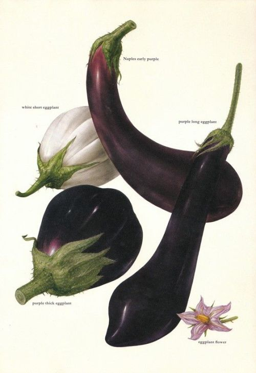 aubergine diagram