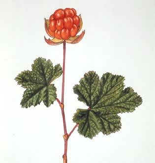 cloudberry diagram