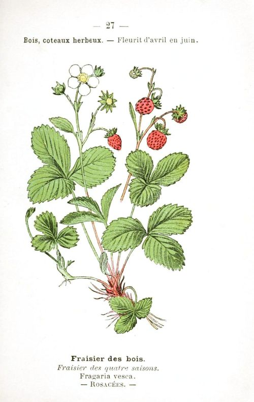 strawberries diagram