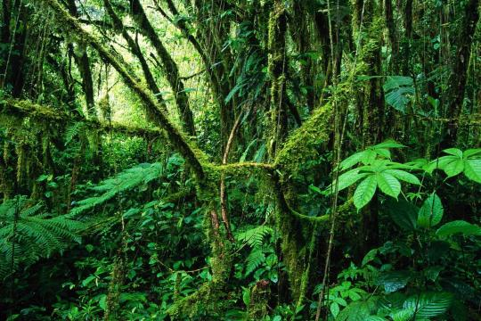 CR Costa RicaMonteverde Cloud Forest